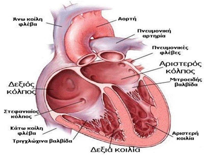 Αποτέλεσμα εικόνας για καρδιά