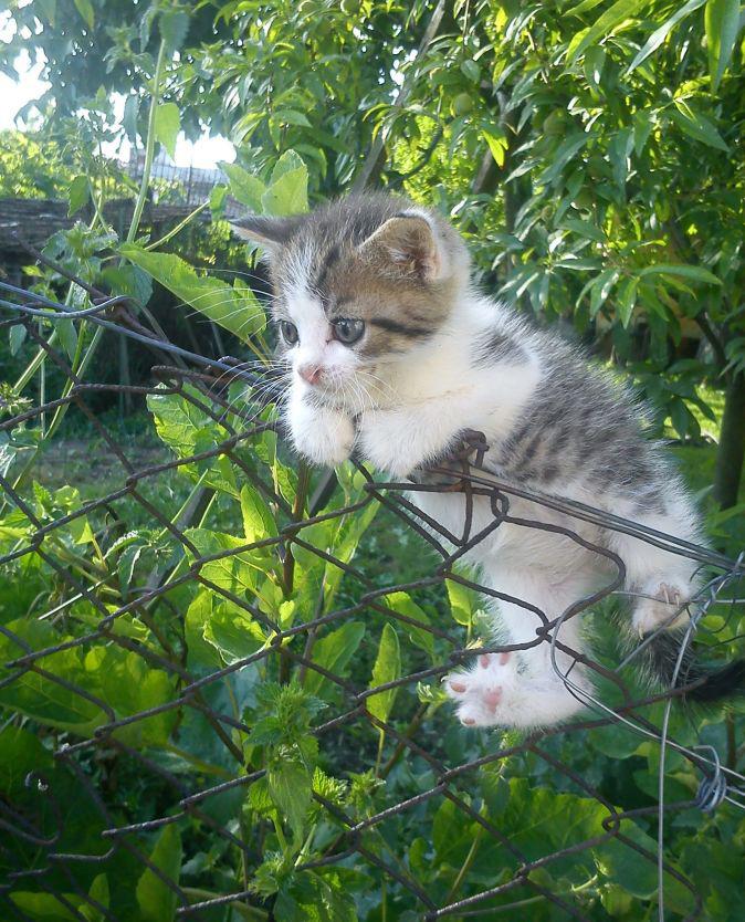 720d68dc3212 Κολπάκια για να μη πηγαίνουν οι γάτες στα φυτά στον κήπο. 5 Αυγούστου 2013.  φωτό .fytokomia.gr-