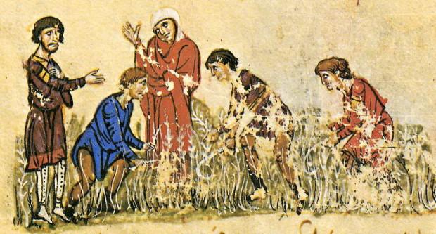 Μικρογραφία σε χειρόγραφο.  Θερισμός.  (©Σύνοψις Ιστοριών Ιωάννου Σκυλίτζη, Ισπανία, Μαδρίτη, Εθνική Βιβλιοθήκη)
