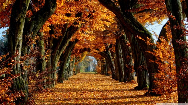 beautiful_path-wallpaper-1280x720