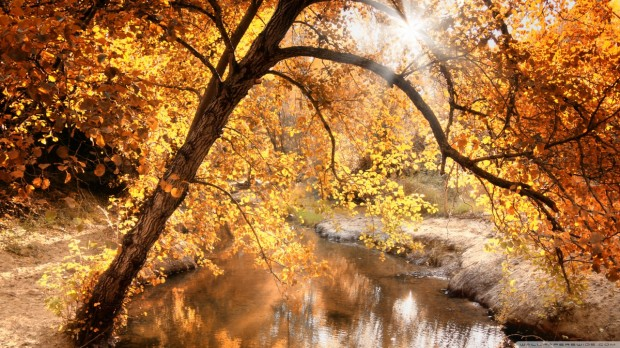 creek_autumn_2-wallpaper-1280x720
