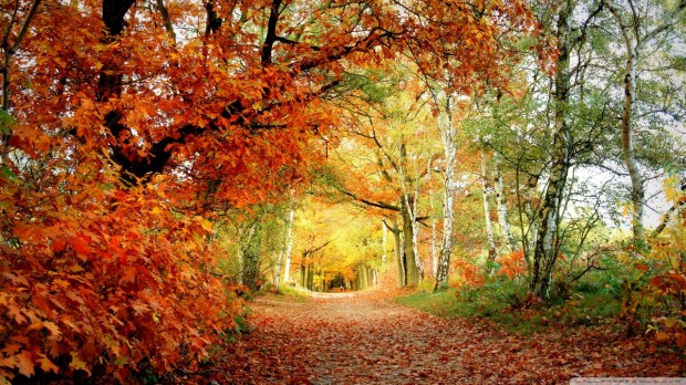 red_foliage-wallpaper-1280x720