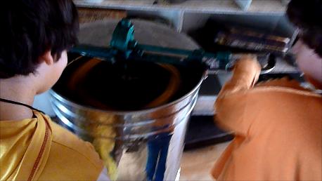 Μελιτοεξαγωγέας