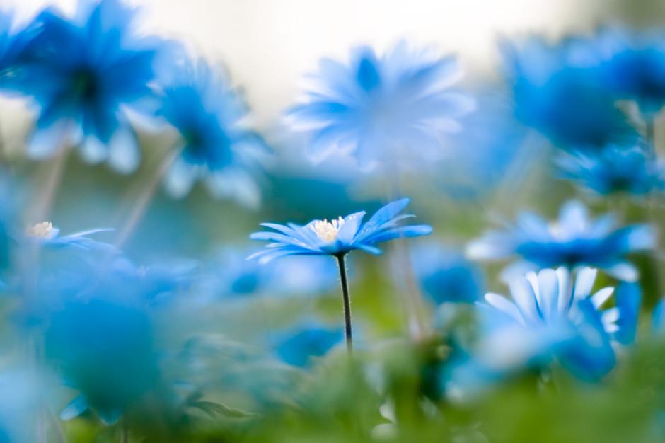 many-flowers-beautiful-nature-22639519-1240-827