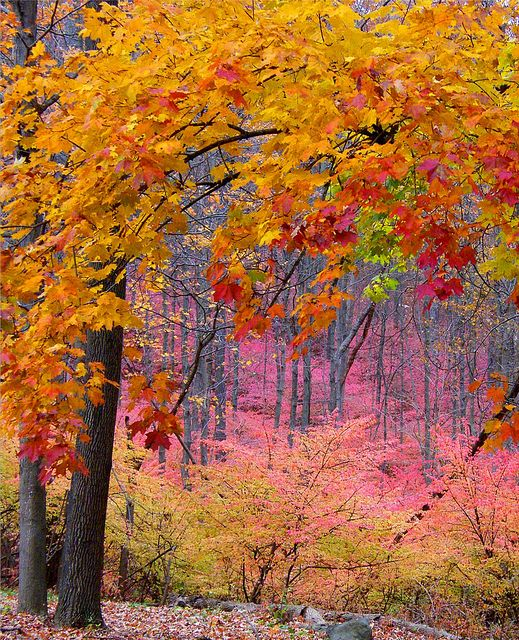 Φωτο:Stanley Zimny - Flickr -Maryellen Fleming -Pink forest