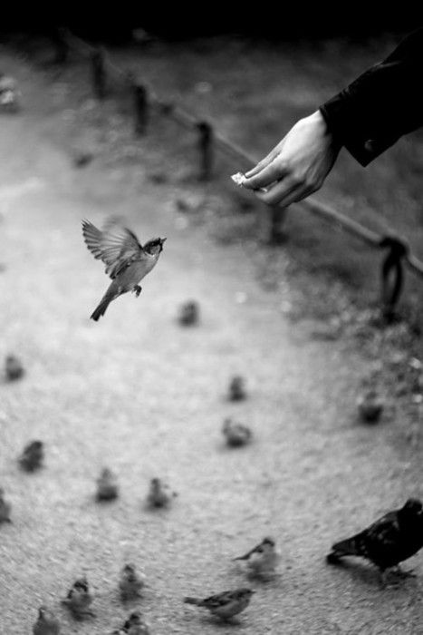 Φωτο: 29.media.tumblr.com S A S H A Feeding the birds