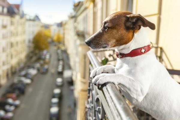 Θα απαγορεύεται η διατήρηση σκύλου σε μπαλκόνια, ταράτσες και κοινόχρηστους χώρους πολυκατοικιών. Θα πληρώνουν εξώδικο οι ιδιοκτήτες.