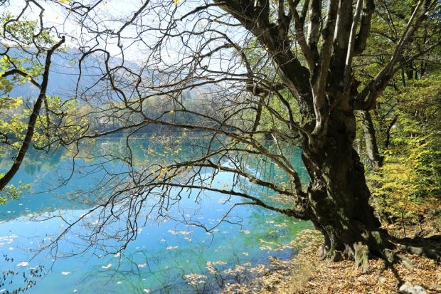 Ένα άλλο μοναδικό φυσικό ορόσημο στην Καμπαρντίνο-Μπαλκαρία είναι οι Μπλέ λίμνες ή Γκολούμπιε Οζιόρα. Η χημική σύνθεση του νερού, τους δίνει ένα μοναδικό γαλαζοπράσινο- τιρκουάζ χρώμα. Σε φωτεινή και ηλιόλουστη μέρα, τα νερά είναι πεντακάθαρα και η ορατότητα φτάνει τα 70 μέτρα. Η λίμνη είναι μοναδική καθώς δεν τροφοδοτείται από ένα και μόνο ποτάμι. Την άνοιξη, η καρστική λίμνη τροφοδοτείται από υπόγειες πηγές. Φωτο:Lori / Legion Media