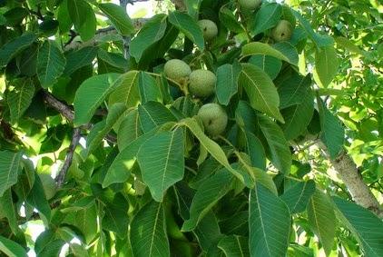 φωτο:tro-ma-ktiko.blogspot.com