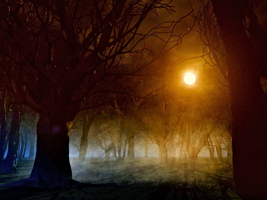 165446_spooky_forest_background_by_indigodeep edited1