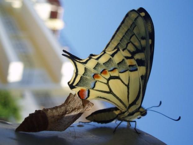 Φωτο:kosmaser.blogspot.com