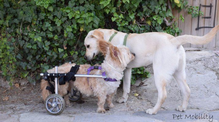 74c07a95cfb6 petshop-1000-715x400 Η Pet Mobility δημιούργησε το πρώτο Ελληνικό αναπηρικό  αμαξίδιο για κατοικίδια ζώα ...
