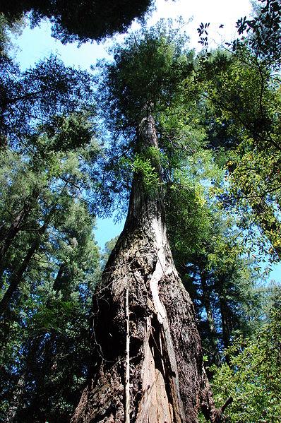 Climbing_Trees-Tree