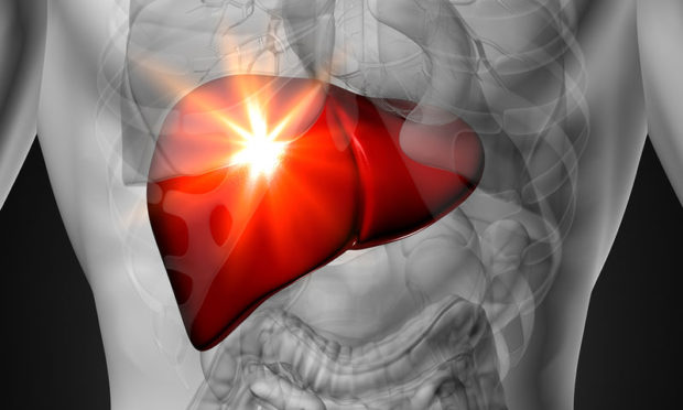bigstock-liver-male-anatomy-of-human-66113698