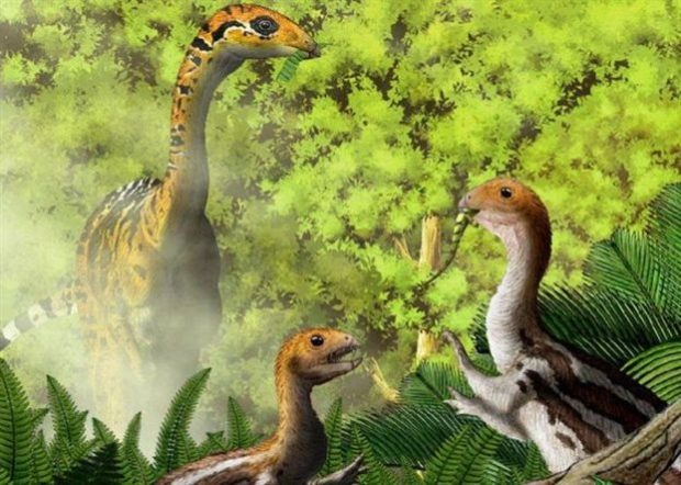Καλλιτεχνική απεικόνιση του Limusaurus που εξελισσόταν όσο μεγάλωνε με μοναδικό τρόπο