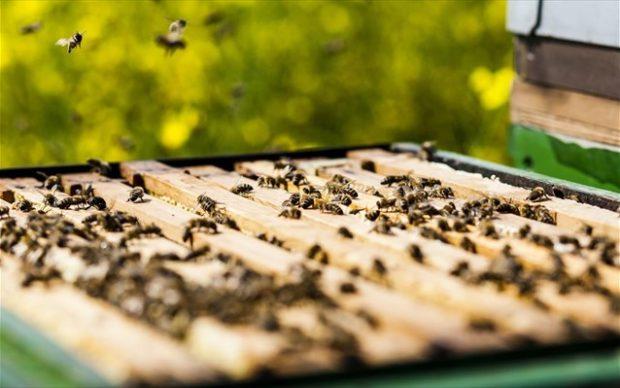 SHUTTERSTOCK Μια πρόσφατη μελέτη που έγινε σε πειραματόζωα από επιστήμονες στην Κροατία, έδειξε τα προϊόντα που προέρχονται από τις μέλισσες όπως είναι ο βασιλικός πολτός, το μέλι, η πρόπολη και το δηλητήριο των μελισσών, έχουν την δύναμη να καταστείλουν την ανάπτυξη καρκινικών κυττάρων και τη δημιουργία μεταστάσεων.