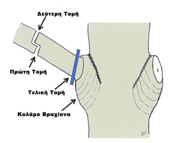 tomes-sto-kladema-lemonias-3463645 (1)