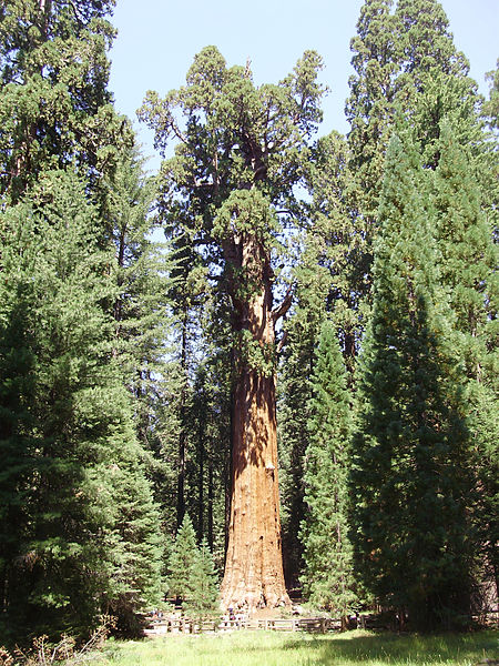 2009-08-27_General_Sherman_Tree_wide