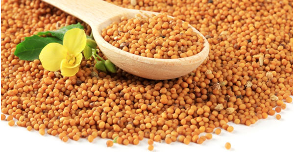 benefits-of-mustard-seeds1